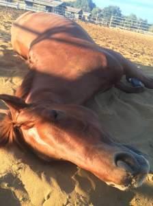Equine napper extraordinaire.